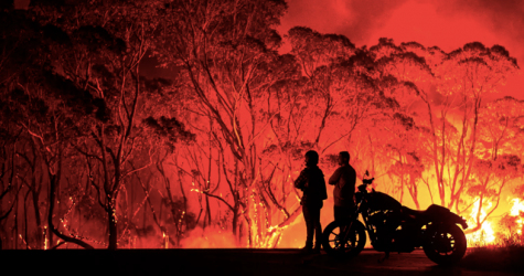 Out of the Ashes: An Update on the Australian Bushfires and the Path to Recovery